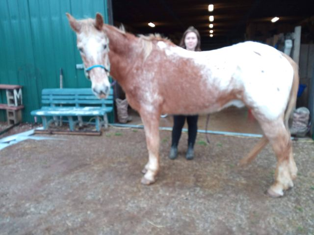 3 - Sept 2020 - 41 year old before Equinety