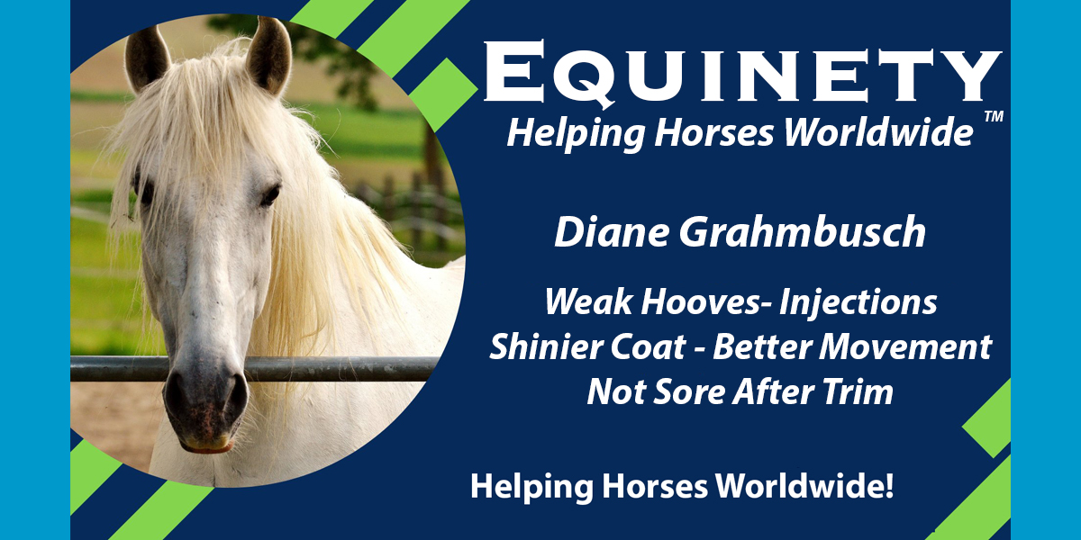 Diane  Grahmbusch | Weak Hooves, Injections Shinier Coat, Better Movement Not Sore After Trim