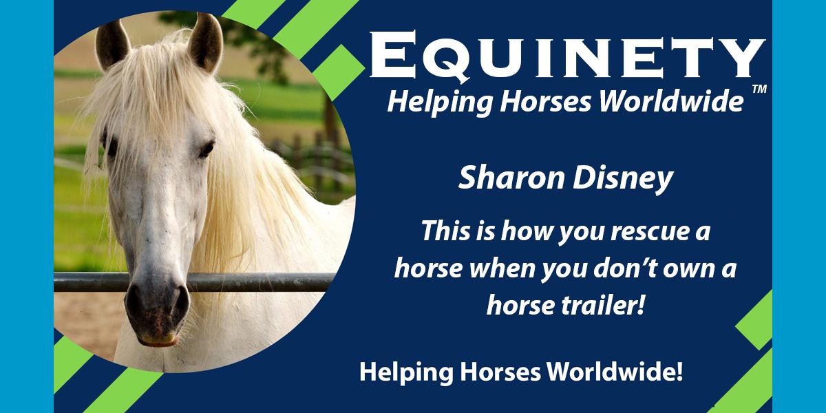 Sharon Disney - Rescue Horses