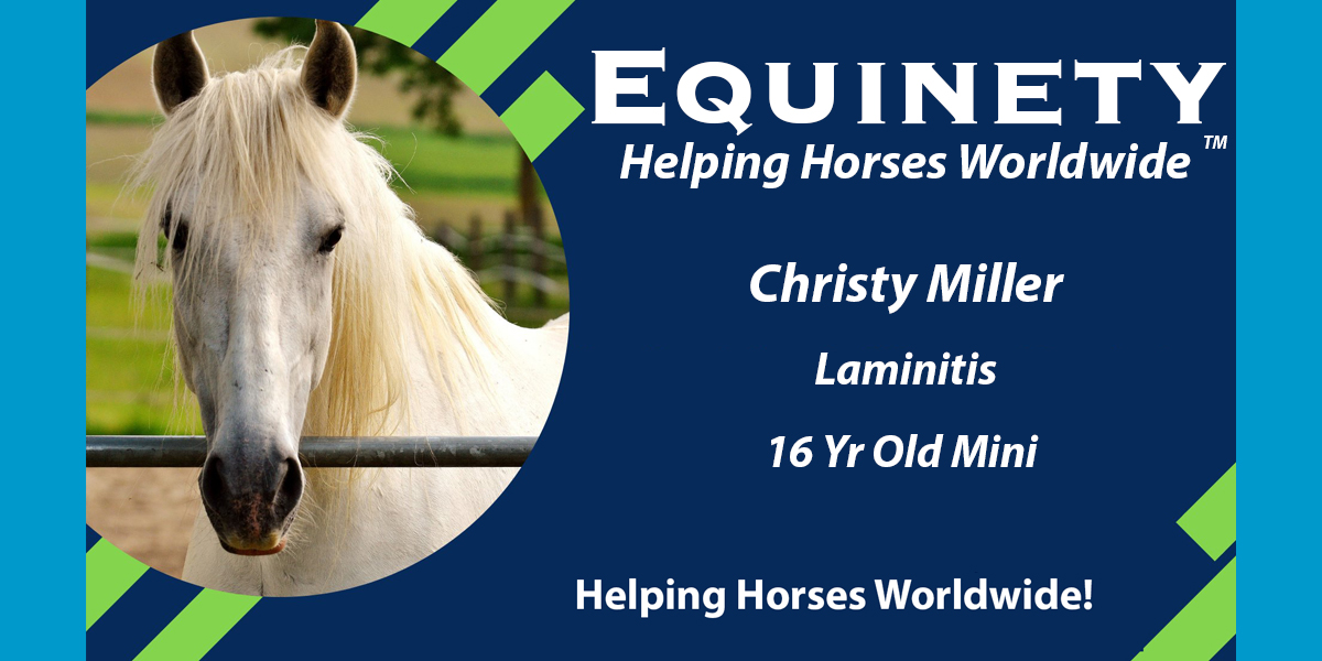 Christy Miller - Laminitis - 16 yr old mini