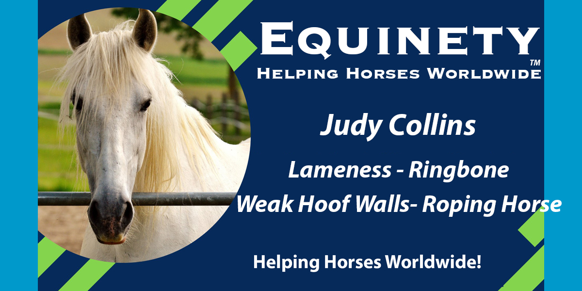 050 – Judy Collins – Roping Horses – Retired - Sinus Infection – Ring Bone – Weak Hoof Walls - Strong hooves now barefoot – Happy and Sound