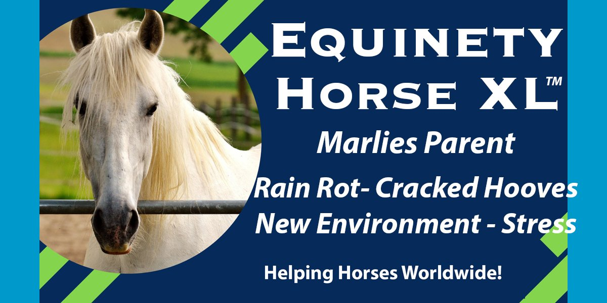 Marlies Parent - New environment - Stressed - Rain Rot - Stronger Hooves - Weight gain - Happier