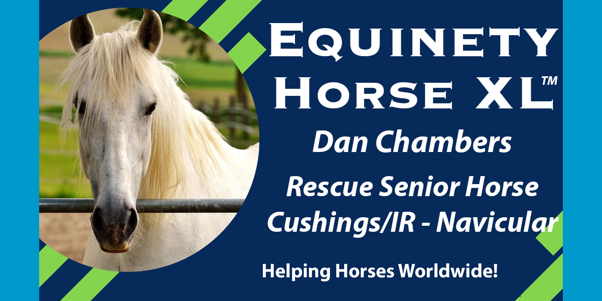 Dan Chambers – Senior horse in poor condition - Navicular – Cushings/IR – now bucking and playing!