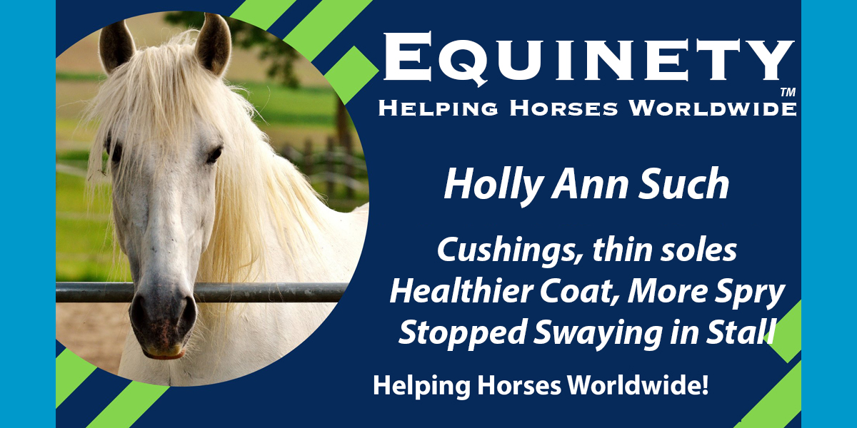 Holly Ann Such – Cushings – Healthier Coat – More Spry - Thin Soles – Feeling Better – Stopped Swaying in Stall