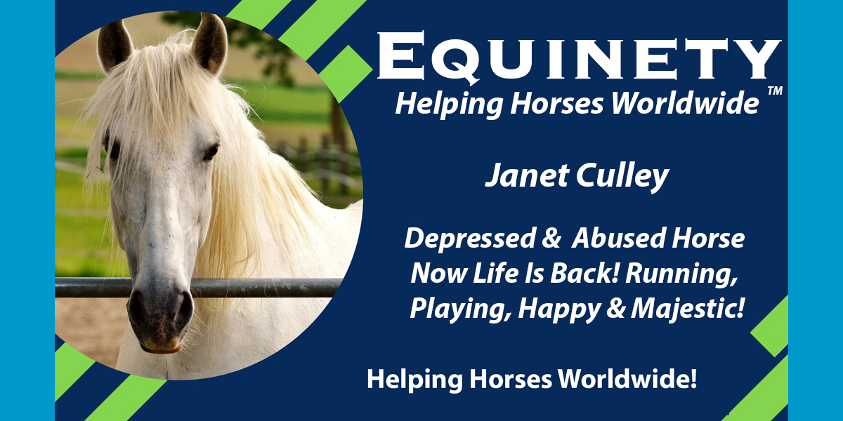 Janet Culley – After 9 years with PTSD, Chino is back at full health!