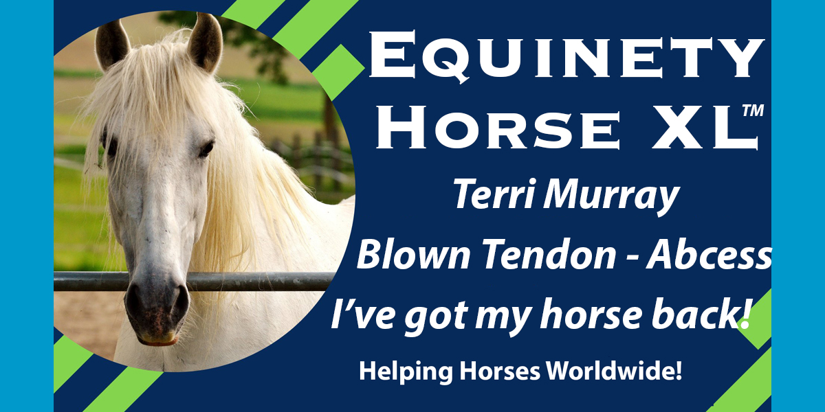 Terri Dinubilo Murray - Blown Tendon, Abscess, Hoof Growth, Shiny Coat, Life is back - Health Happy Horse