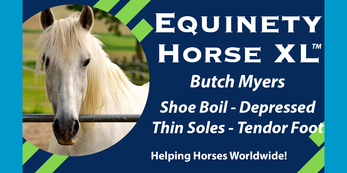 Butch Myers - Depressed aging horse - Shoe Boil – thin soles – tender footed - Underweight