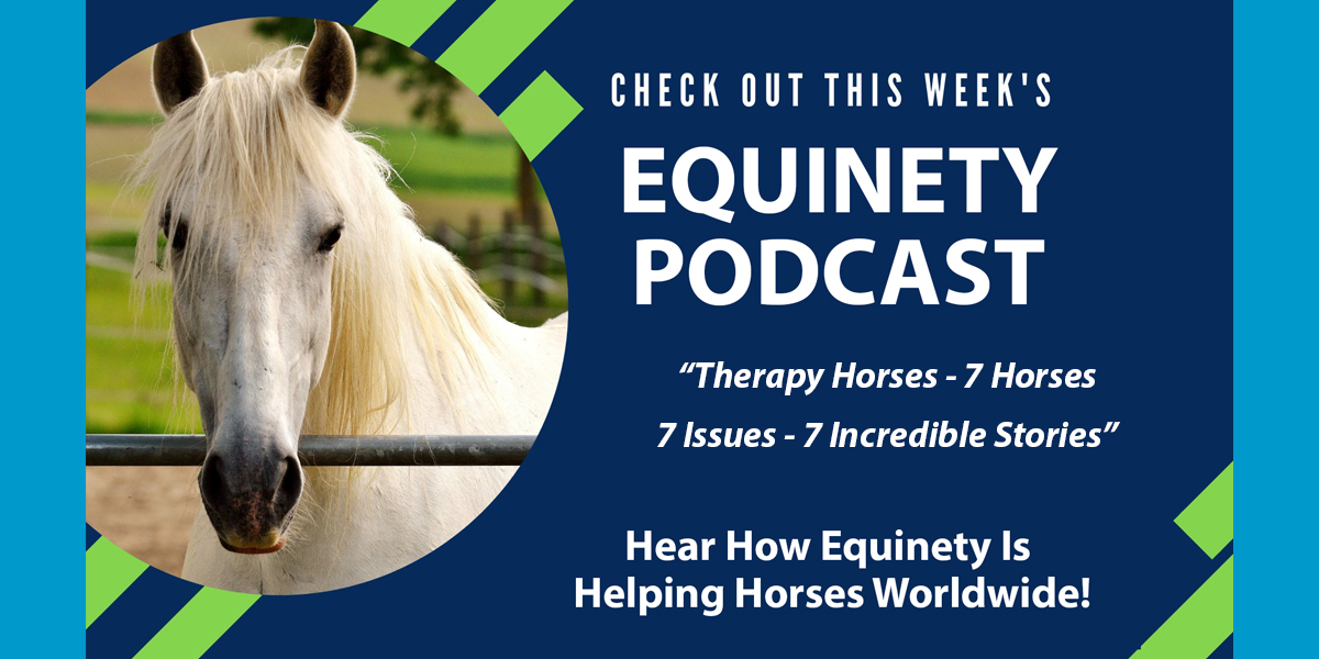 Therapy Horses - 7 Horses - 7 Issues - 7 Incredible Stories - Horses of Warriors