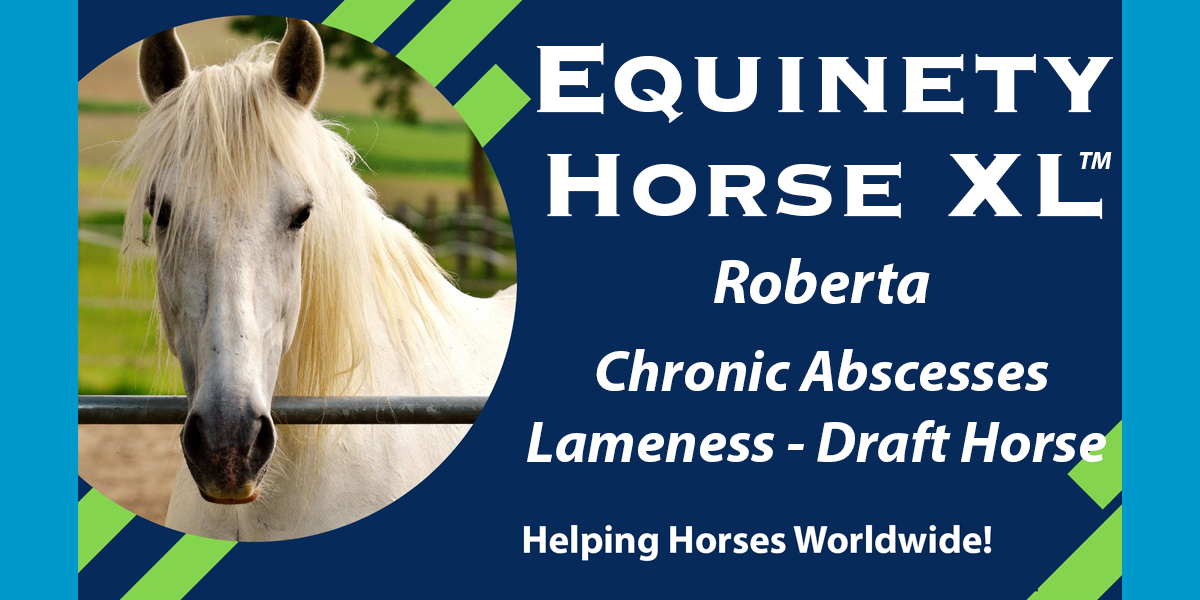 2200lb Draft Horse Diesel Recovers From Lameness Due To Abscesses