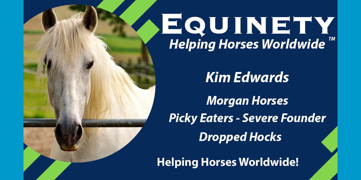 Kim Edwards - Morgan Horses - Picky Eaters - Founder - Dropped Hocks