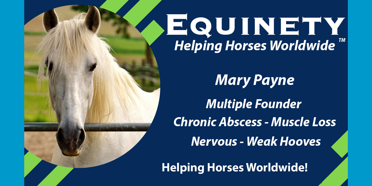 Mary Payne Multiple - Founder - Chronic Abscess - Muscle Loss - Nervous - Weak Hooves